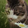 R0BUTT's avatar