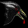 RabidCrow's avatar