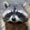 RaccoonMilk's avatar