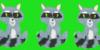 Raccoons-4ever's avatar