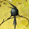 RachelRaven's avatar