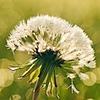 Raeofsunshine101's avatar