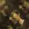 rafini07's avatar