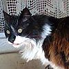 RAIDEN19052's avatar