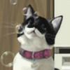 RaidFox's avatar