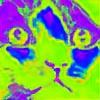 rainbowcolors1356's avatar