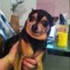 RainbwBloom657's avatar