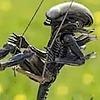RainInTheWillows's avatar