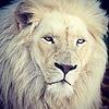 Ranga66's avatar