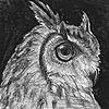 ratatoosks's avatar