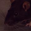 RatsLover's avatar