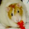 RattyLove's avatar