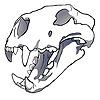 Raua's avatar