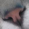 Raunagil's avatar