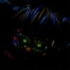 Raven-hecker's avatar