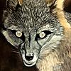 RavenLunatic666's avatar