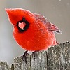 Raznac's avatar
