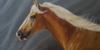 Realistic-equine-art