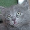 RebelVampire's avatar
