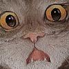 Recitto's avatar