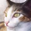 RedEyedDemon's avatar