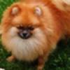 Redfoxcgirl's avatar