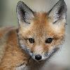 RedFoxGirl92's avatar