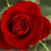 Redrosesforever's avatar