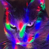 reignofkittens's avatar