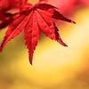 Reikantuyoi's avatar