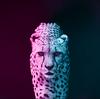 Reinathan502's avatar