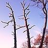RenzoEHernandez's avatar