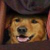 Revenant337's avatar