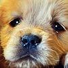 RevyOwls's avatar