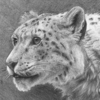 Rhagrim's avatar
