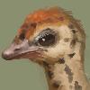 Ricebirdmon's avatar