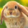 rileystrickland's avatar