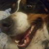 Rime01's avatar