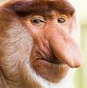 RioTomboy's avatar