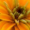 rivo3622's avatar