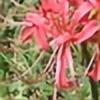 rldameron's avatar