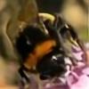Roadrunner01's avatar