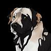 RoaringRapids's avatar