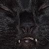 Robinblood's avatar