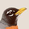 RobinVance's avatar