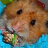 robotte's avatar