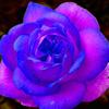 Rockgirl1758's avatar