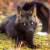RongFox's avatar
