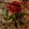 Rosa-killjoy's avatar