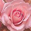 rosaliesimoned's avatar